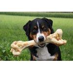 Bones4Dogs